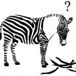 i-db2cb78fa4b128fad30b99188c007827-zebra