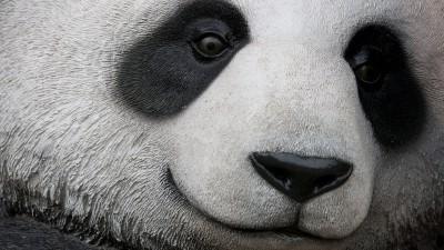panda-face-ss-1920-800x450